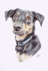 illustration, pet portraits, custom portraits, Belfast, Northern Ireland, pencil portraits