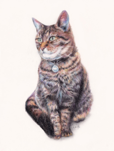 Cats, Custom portraits, pencil portraits, illustration, belfast, northern Ireland, pets