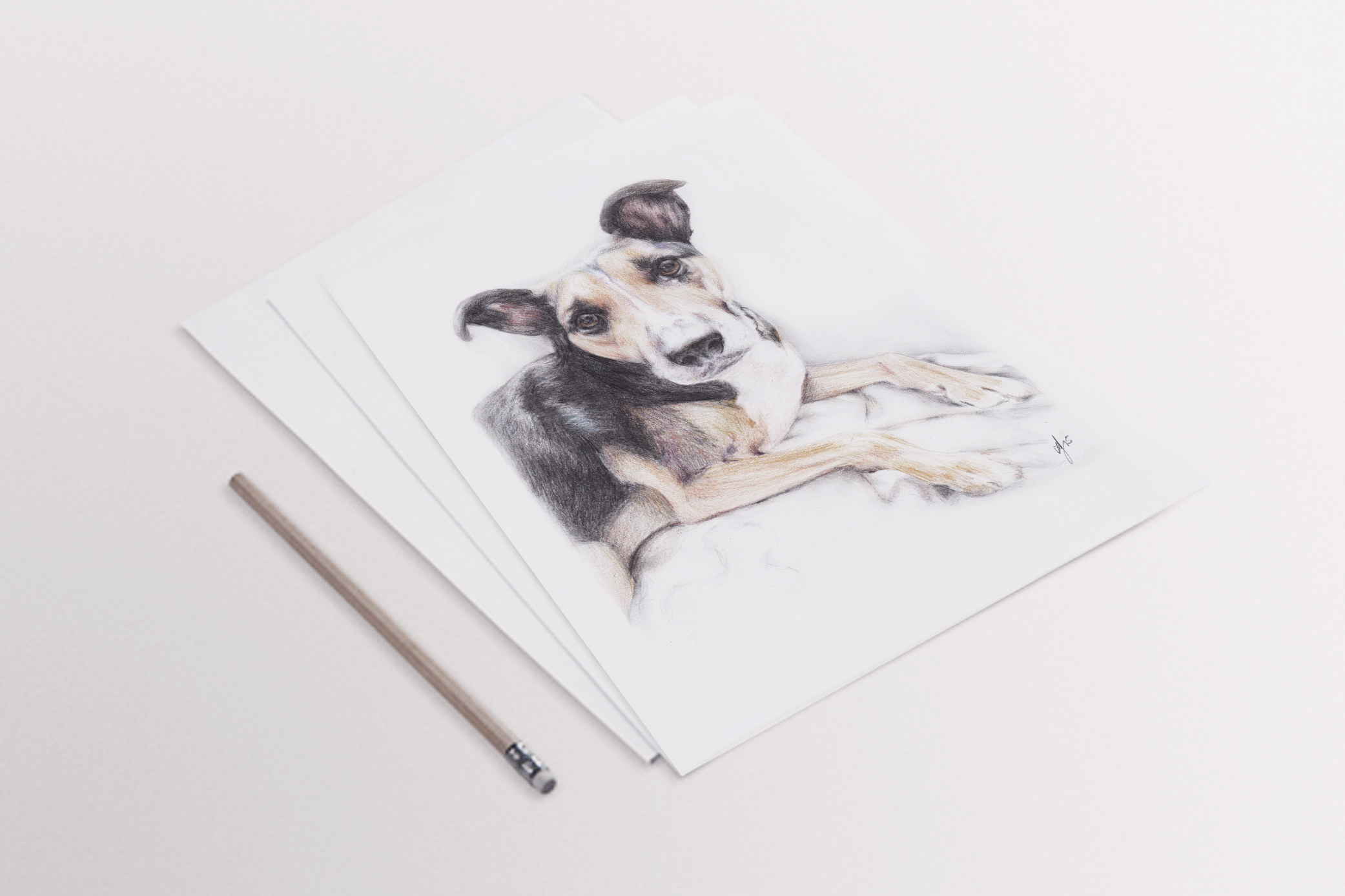 Pencil Portraits, Custom Portraits, Pet Portraits, Pets, Belfast, Northern Ireland, Illustration